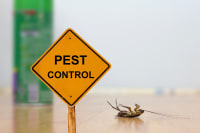 Landscaping and Pest Control: How Yard Design Stops Infestations
