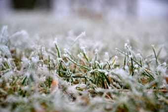 Everything You Need to Know About Winter Lawn Care