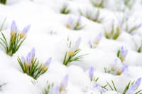 What to Do When the Snow Melts: Preparing Your Lawn for Spring
