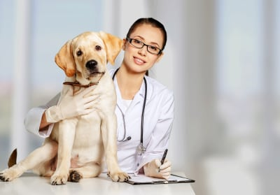 Why should I bring my pet in for a fecal exam?