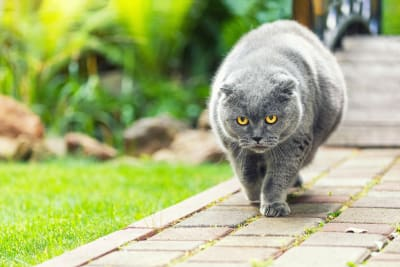 Is Your Cat Overweight? Signs, Symptoms & What to Do Next