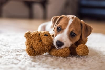 Must-Have Items You Need Before Bringing Home a Puppy