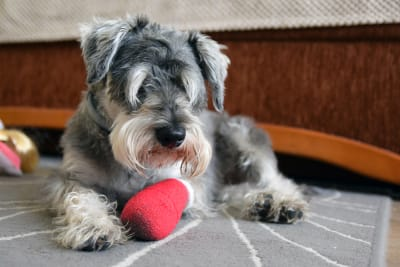 Caring for Your Dog After Orthopedic Surgery: Managing Pain and Speeding Recovery