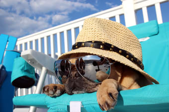 Boarding & Other Options For Pet Care While You're Away