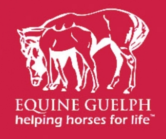 University Of Guelph Equine Certificate And Diploma Programs
