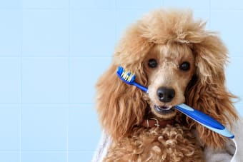 6 Common Myths About Your Pet's Dental Care