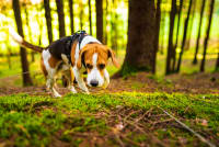 About Tick Borne Diseases in Dogs