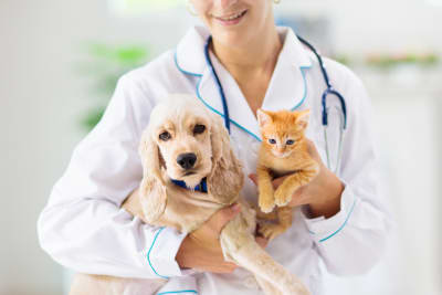 What happens during a pet wellness checkup?