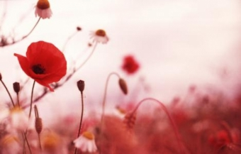 Remembrance Day: Focus on Veteran Mental Health