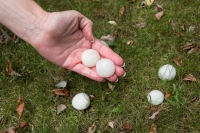 Tips to Prevent Hail & Windstorm Damage