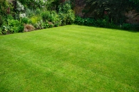 How to Plant a Lawn From Seed