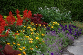 Annuals: Five Steps to Fantastic Color