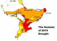 The Ontario Drought Continues - This Is The Summer to Root Rescue your Landscape Plantings!