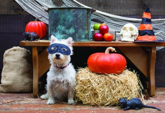 "How to throw the ""paw-fect"" Halloween party"