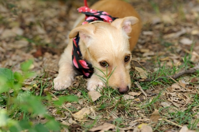 Why Dogs Eat Their Poop & How to Stop It