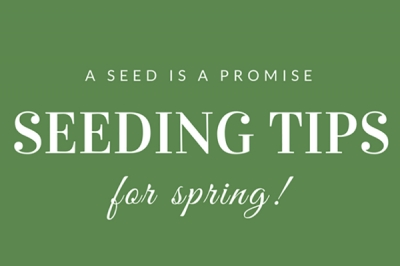 A Seed is a Promise | Tips on Growing & Sowing Seeds
