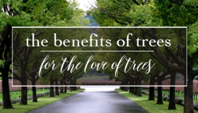 Benefits of Trees | For the Love of Trees | Brockville Garden Centre