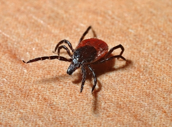 Protect Yourself from Ticks This Summer