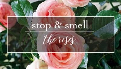 Stop & Smell the Roses | Timeless Beauty and Fragrance, Roses are a Classic in the Garden