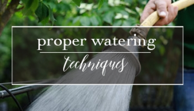 Proper Watering Techniques for your Trees, Shrubs & Hanging Baskets | Gemmell's Garden Centre