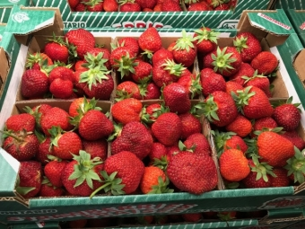 Fresh Ontario Strawberries now available at Glenburnie Grocery!